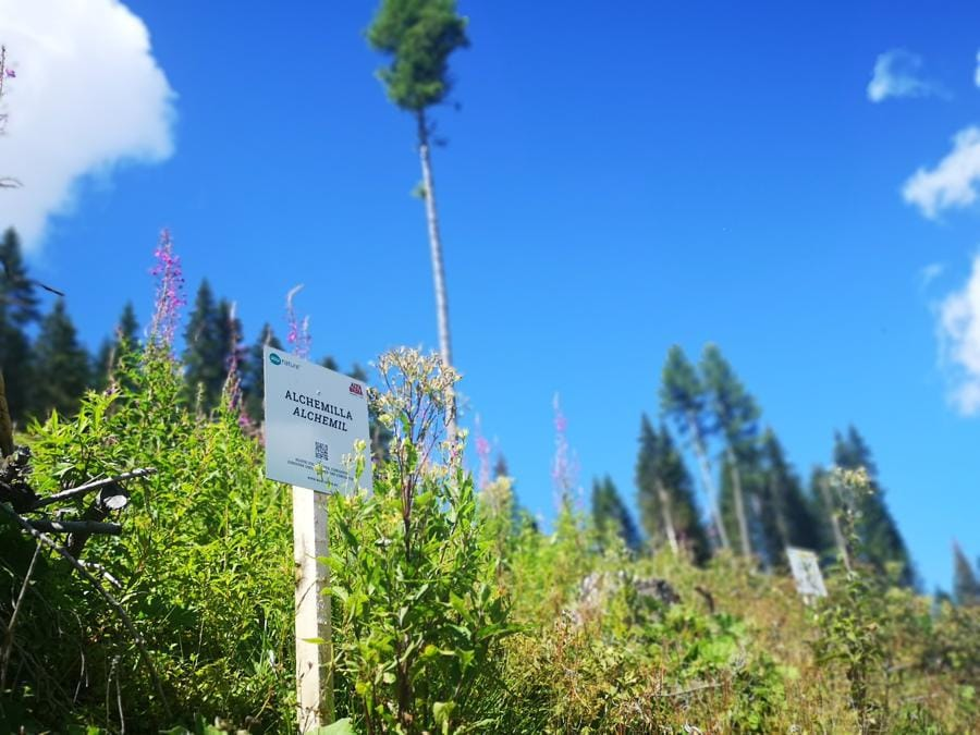La natura in Alta Badia, iniziativa WowNature