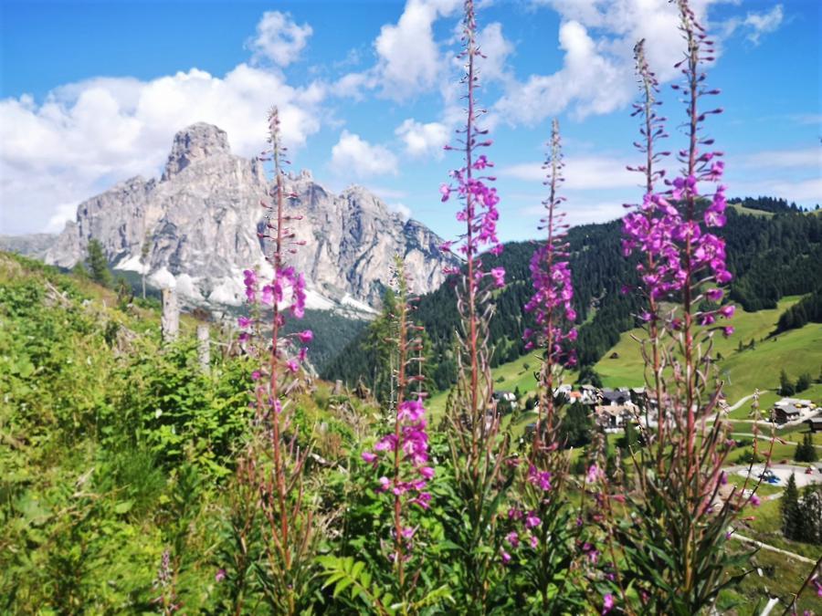 Panorama in Alta Badia (iniziativa WowNature)