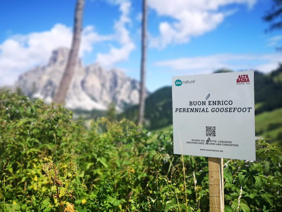 Una vista dell'Alta Badia (iniziativa WowNature)