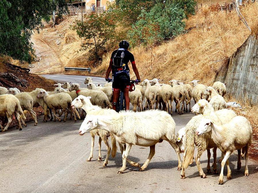 Traffico intenso intorno a Regalbuto